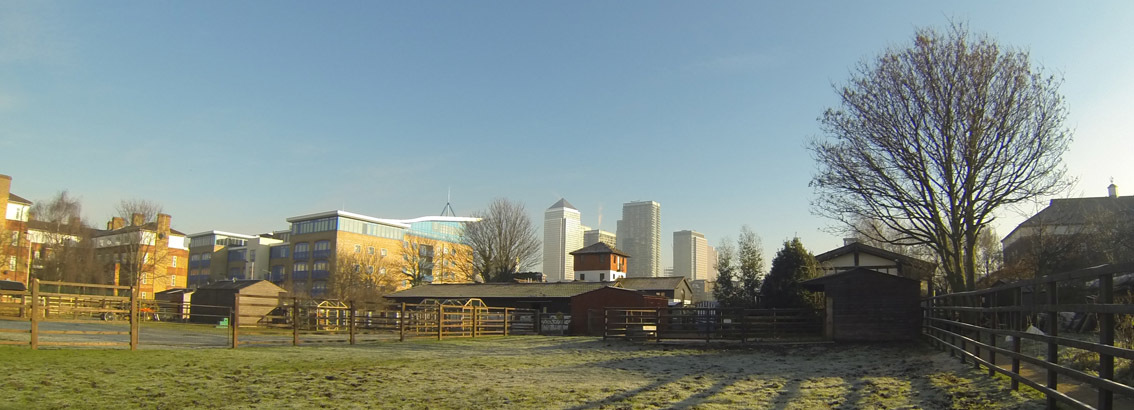Morning Sun Surrey Docks Farm