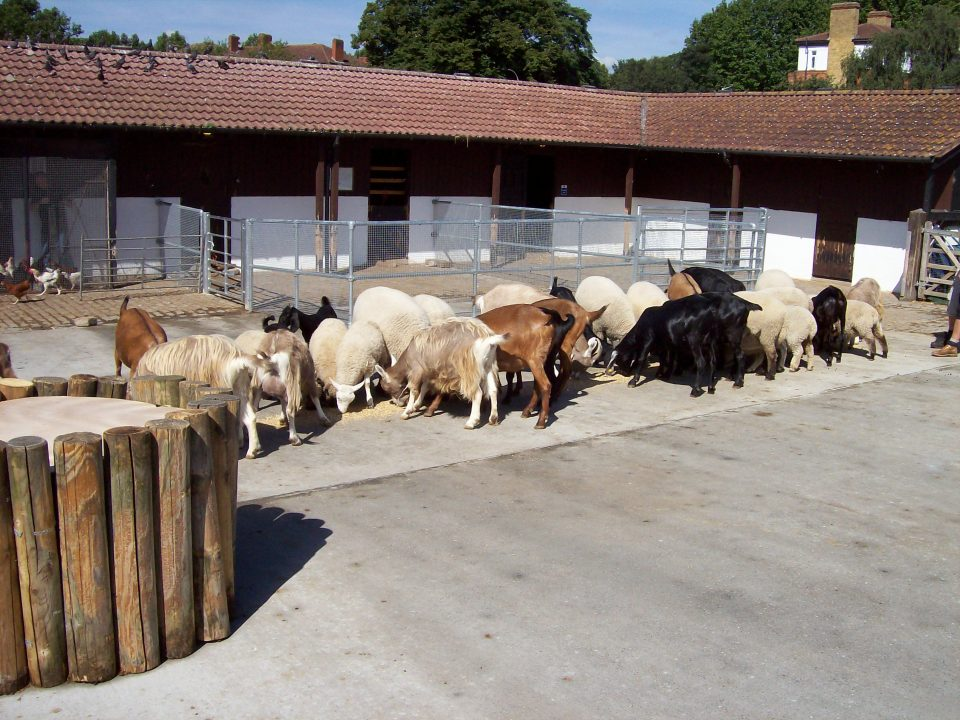 The new farm yard and animal petting area